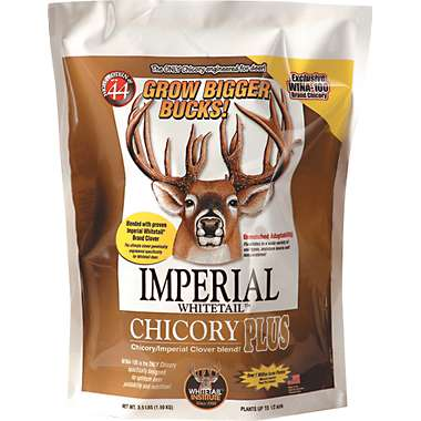 Whitetail Institute Imperial Chicory Plus - 14#