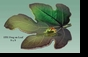 Jeanne Reed's - Leaf with Frog