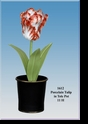 Jeanne Reed's - Porcelain Tulip in Tole Pot