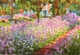 Art - Oil Paintings - Masterpiece #4385 - Claude Monet - Artist s Garden at Giverny - Gallery Quality
