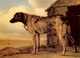 Art - Oil Paintings - Masterpiece #3050 - POTTER, Paulus - Watchdog - Museum Quality