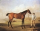 Art - Oil Paintings - Masterpiece #3057 - STUBBS, George - Molly Longlegs with Jockey (mk08) - Gallery Quality