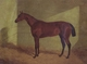 Art - Oil Paintings - Masterpiece #3091 - John Frederick Herring - Margrave Winner of the st Leger - Gallery Quality