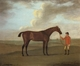 Art - Oil Paintings - Masterpiece #3125 - Francis Sartorius - The Racehorse 'Basilimo' Held by a Groom on a Racecourse - Gallery Quality