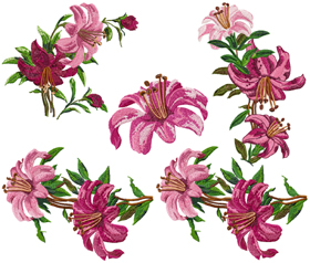 Lilium Collection
