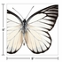 Entomount Butterfly Beverage Napkins 288 ct