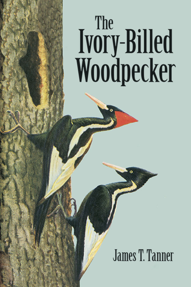 The Ivory-Billed Woodpecker