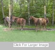 Camping With Horses - Tying a High Line