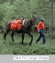 Saddle Panniers - View All