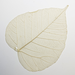 Skeleton Leaf Bo Tree 10pk, Cream
