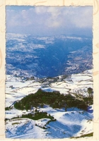 Postcard: The Cedars Forest & the Kannoobin Valley - North Lebanon (Vintage Style)  بطاقة بريدية