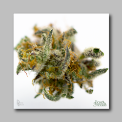 Baylien Weed Sticker - Marijuana Sticker 0024