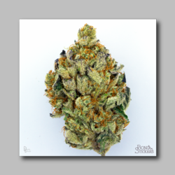 Baylien Weed Sticker - Marijuana Sticker 0025