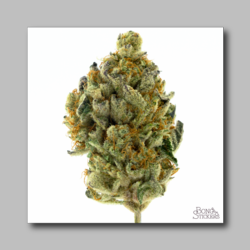 Baylien Weed Sticker - Marijuana Sticker 0026