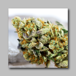 Baylien Weed Sticker - Marijuana Sticker 0027
