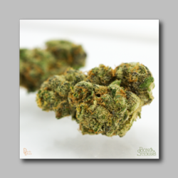Berners Cookies Weed Sticker - Marijuana Sticker 0001