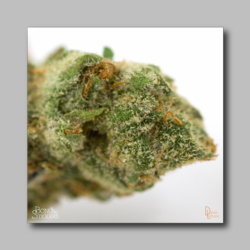 Berners Cookies Weed Sticker - Marijuana Sticker 0003
