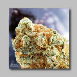 Black Berry Weed Sticker - Marijuana Sticker 005