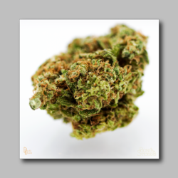 Afgoo Bud Sticker - Marijuana Sticker 002 - devilslettuceph