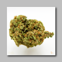 Afgoo Bud Sticker - Marijuana Sticker 003 - devilslettuceph
