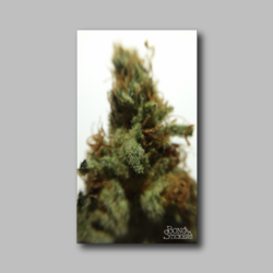 Agent Orange Bud Sticker - Marijuana Sticker