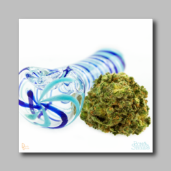 Banana Diesel Bud Sticker - Marijuana Sticker 001 - devilslettuceph
