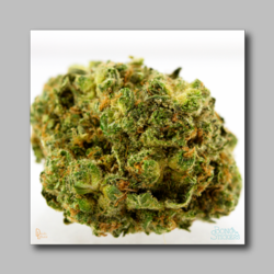 Banana Diesel Bud Sticker - Marijuana Sticker 002 - devilslettuceph