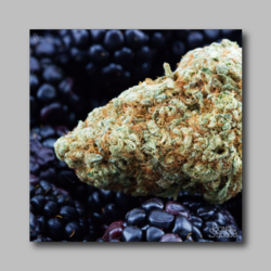 Black Berry Weed Sticker - Marijuana Sticker 002 - devilslettuceph