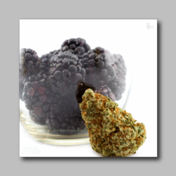 Black Berry Weed Sticker - Marijuana Sticker 004 - devilslettuceph