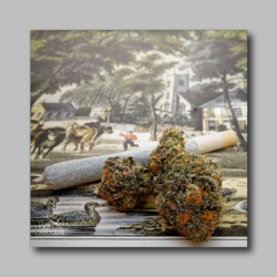 Black Cookie At The Village Street Weed Sticker - Marijuana Sticker