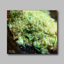 Island Sweets Kunk Keif Weed Sticker - Marijuana Sticker
