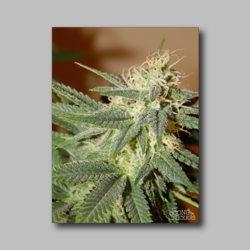 Space Candy Weed Sticker - Marijuana Sticker 002