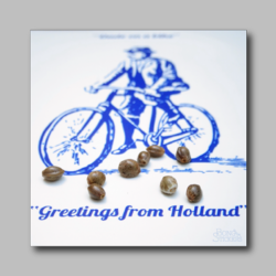 Holland Marijuana Seeds - Marijuana Sticker