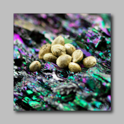 Marijuana Seeds On Colorful Rocks - Marijuana Sticker