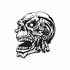 Skull Wall Decal - Vinyl Decal - Car Decal - DC 8134