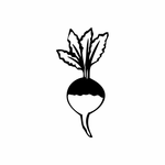 Growing Turnip Decal