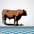Hereford Cow Cattle Sticker