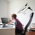 Curious Bottlenose Dolphin Decal