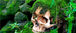 Vegetation Skull Decals