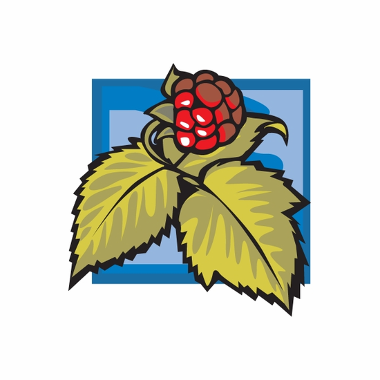 Raspberry on Vine Sticker