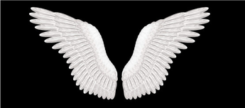 Wing Decals