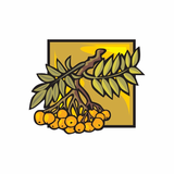 Kumquat Sticker