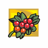 Cranberries on a bush Sticker