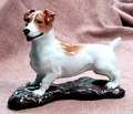 Jack Russell Terrier Smooth