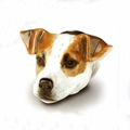 Jack Russell Stirrup cup