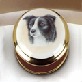 Border Collie Box