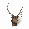 Stag Wall Mount