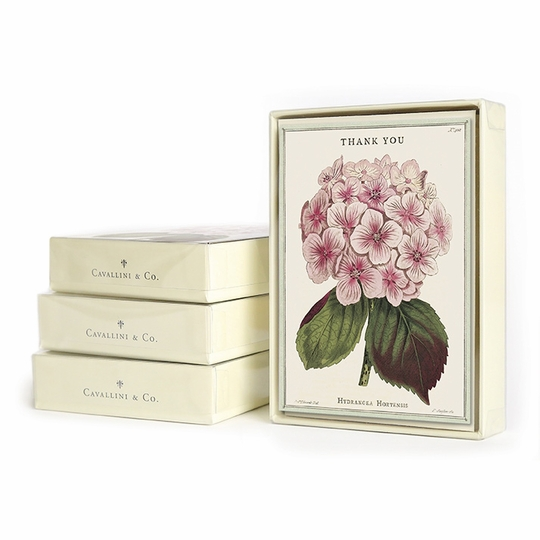 Cavallini Boxed Thank You Notecards (3.75 x 5.25) ( Hydrangea Thank You )