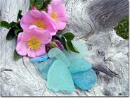 Sea glass and Roses Photo