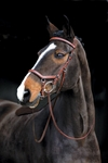 Rambo� Micklem Competition Bridle